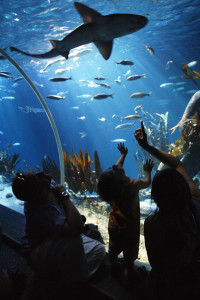 Sealife Speyer