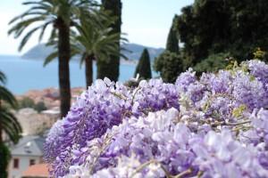 glicini_villa_della_pergola