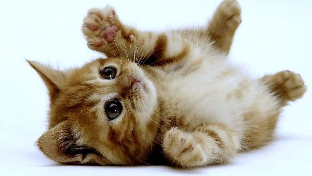 sito di incontri gattini