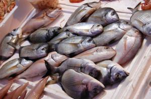 sagra-del-pesce-bollate