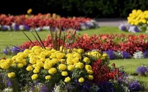 fiori-da-giardino