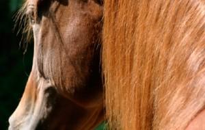 varese-cavalli-2015