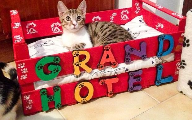 gatti in adozione fantastici gattari 1