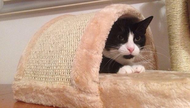 gatti in adozione fantastici gattari 2
