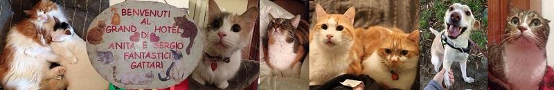 gatti in adozione fantastici gattari 4
