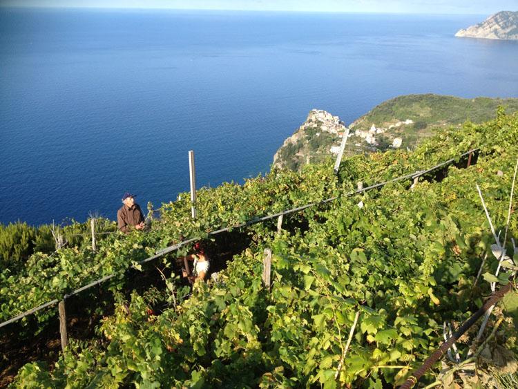 Sentiero Volastra Corniglia Cinque Terre