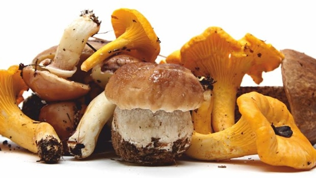 funghi-e-tartufi-in-festa